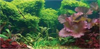 SPORN Aquarium Background, Static Cling, Tropical,