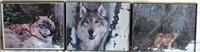 Misc Wolf Pics
