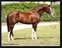 2019 Westfalen Stallion Service Auction