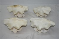 (4) Shell Dishes