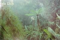 Vintage Island Postcard Lot