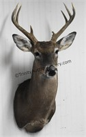 Whitetail Buck 10 Point Trophy Mount