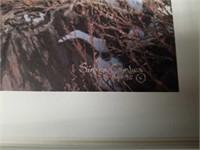 Simon Combes' Great Cats Adventure Print Portfolio