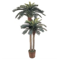 6' and 4' Double Potted Sago Palm Tree