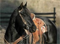Online Only Horse Tack And Miscellaneous Auction Live And Online Auctions On Hibid Com