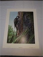 R.S. Parker Red Cockaded woodpecker print