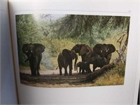 """""""An African Experience"""" Book by Simon Combes"""
