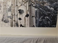 "Signed Stephen Lyman ""Sentinel of the Grove"" Print"