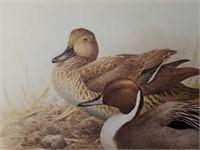 """Signed J.F. Lansdowne """"Pintail Ducks"""" Print"""