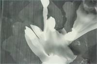American Dada-Surrealist Photogram Signed Man Ray