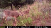 Oklahoma Hunting & Ranch Land for Sale 160 Acres Washita Co.