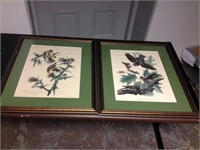 Framed Art (set of 2) - BIRDS, $25.00 Reserve