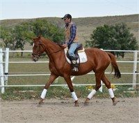 2018 Solomon Farm Riding Horse and Pony Fall Sale