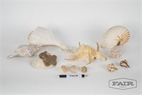 Lot of variety of shells