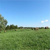 The Broyles Trust - Lingo Farms