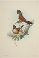 Waverly Rare Books Catalog & Natural World II Auction