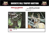 Buckeye Fall Trophy Auction