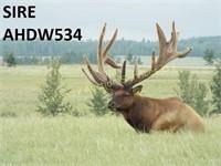 Elk Trophy Bull & Breeding Stock Auction 2018