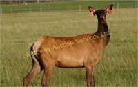 Whispering Winds Ranch Ltd - Production Auction 2018