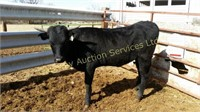 Gateway Spring Horse & Longhorn Auction May 5, 2018