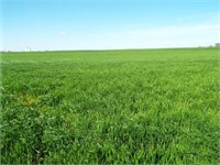 5/10 160± ACRES OFFERED IN TRACTS