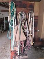 Livestock show halters, bits, leads