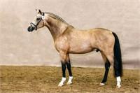 2018 Westfalen NA Second Chance Stallion Service Auction