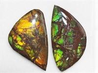 Genuine Canadian Ammolite Gemstone