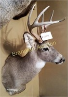 Lifetime Taxidermy Collection