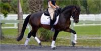 2018 Westfalen NA Stallion Service Auction