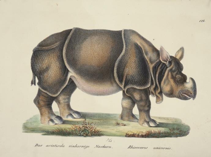 Heinrich Schinz & Bernard Direxit  Exotic Animals  | Quinn's