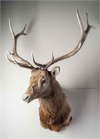 Taxidermy and Estate Auctions 10/29/17