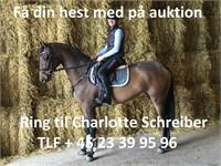 1500 NET: AUKTION O/FØL, PLAGE, DSP PONYER M.M (HELE LANDET)