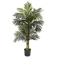 5FT GOLDEN CANE PALM TREE