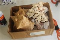 Box of Sea Shells