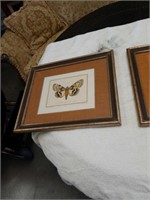 Bundle of butterfly pictures