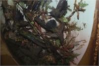 HUMMINGBIRD DIORAMA (18 BIRDS TOTAL)
