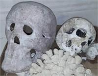 Macabre Decor And Seashells