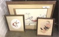 Framed Bird Prints
