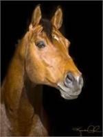 2017 RPSI Second Chance Stallion Service Auction