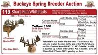 2017 Buckeye Spring Breeder Auction