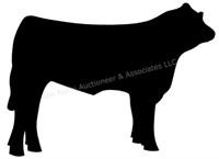 LIVE: Shiawassee Co. Jr. Livestock Assn. (Market Beef)