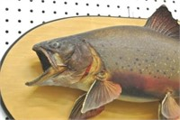 Taxidermy Mounted Fish