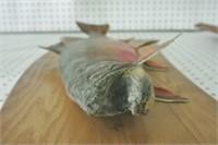 Taxidermy Salmon