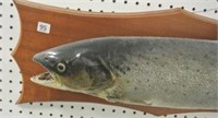 Taxidermy Speckled Trout