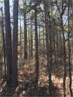 Clark County 72 AC +/- Timberland Auction