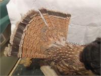 Taxadermy Stuffed Grouse