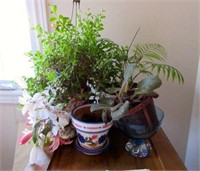 Lot of Various Plants and Planters