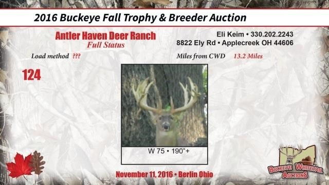 W 75 trophy buck | Buckeye Whitetail Auctions