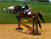 Brookhill Farm Two Horseback Riding Lessons